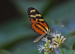 Butterflies of Andes
